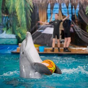 Дельфинарии, океанариумы Сергиева Посада