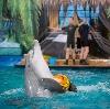 Дельфинарии, океанариумы в Сергиевом Посаде